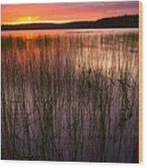 Lake Reeds At Sundown Wood Print