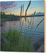 Lake Sunset And Sedge Grass Silhouettes, Pocono Mountains Wood Print