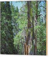 Lake Tahoe Tree Wood Print