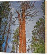 Lake Tahoe Trees On 89  Wood Print