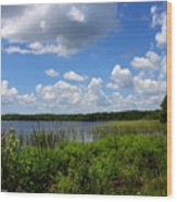 Lake Tarpon Wood Print