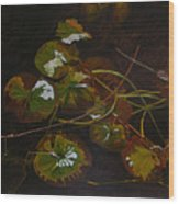Lake Washington Lily Pad 16 Wood Print
