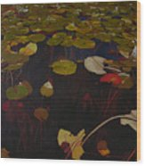 Lake Washington Lilypad 7 Wood Print