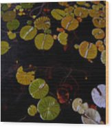 Lake Washington Lilypad 8 Wood Print