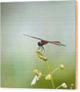 Lakes Park Butterfly Garden Wood Print