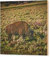 Lamar Valley Buffalo Wood Print