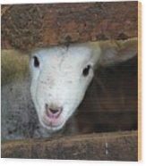 Lamb Wood Print by Christy Majors