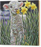 Lamb Collection Wood Print