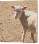 Lamb Looking Cute. Wood Print