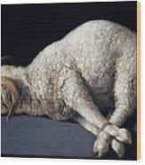 Lamb Of God. Agnus Dei Wood Print