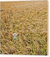 Lamb With Barley Wood Print by Meirion Matthias