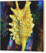 Lambis Digitata Seashell Wood Print