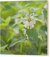 Lamium Album White Flowers Macro Wood Print