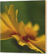 Lance Leaved Coreopsis Wood Print
