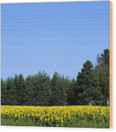 Land Of Sunflowers Wood Print