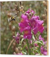 Landing Bumblebee Wood Print
