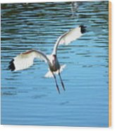 Landing Ibis Wood Print