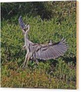 Landing On A Dime Wood Print