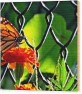 Landing On Marigold Wood Print