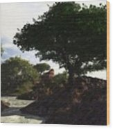 Landscape 082510 Wood Print