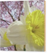 Landscape Daffodils Flowers Art Pink Tree Blossoms Spring Baslee Wood Print