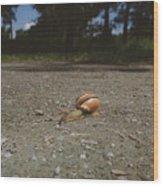 Landscape Of The Snail Wood Print