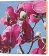 Landscape Pink Magnolia Flowers 46 Blue Sky Magnolia Tree Wood Print