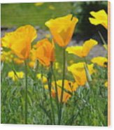 Landscape Poppy Flowers 5 Orange Poppies Hillside Meadow Art Wood Print
