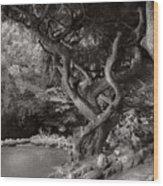 Landscape - The Forbidden Forest Wood Print
