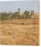 Landscape With Cows Grazing In The Field . 7d9957 Wood Print