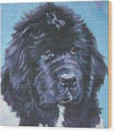 Landseer Newfoundland Puppy Wood Print
