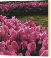 Lane Of Pink Wood Print