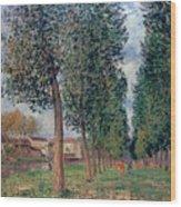 Lane Of Poplars At Moret Wood Print