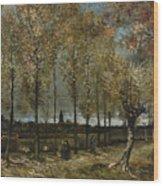Lane With Poplars Wood Print