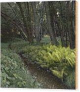 Langdon Fernpath Wood Print