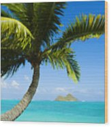Lanikai Palm Wood Print
