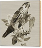 Lanner Falcon Collage Wood Print