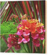 Lantana And Stripes Wood Print
