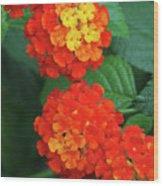 Lantana Bandana Red Flower Wood Print