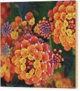 Lantana Blooms Wood Print