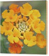 Lantana Flower Wood Print