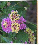 Lantanna's Blooms Wood Print