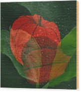 Lantern Flower Wood Print