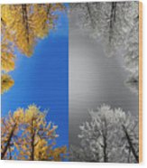 Larches Color To Black And White Reflection Wood Print