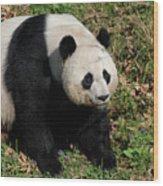 Large Black And White Giant Panda Bear Sitting Wood Print
