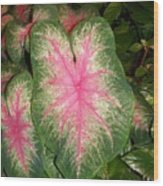 Large Coleus Plant Wood Print