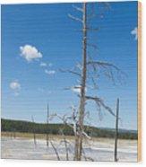 Large Dead Standing Tree In Hot Springs  Wood Print