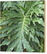 Large Fern Wood Print