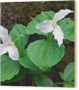 Large Flower Trillium Pair Wood Print