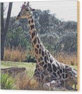 Large Giraffe Wood Print